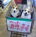 りき(左)&せぶ(右)